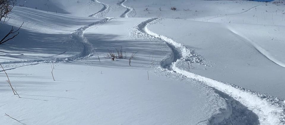 backcountry ski turns in fresh snow