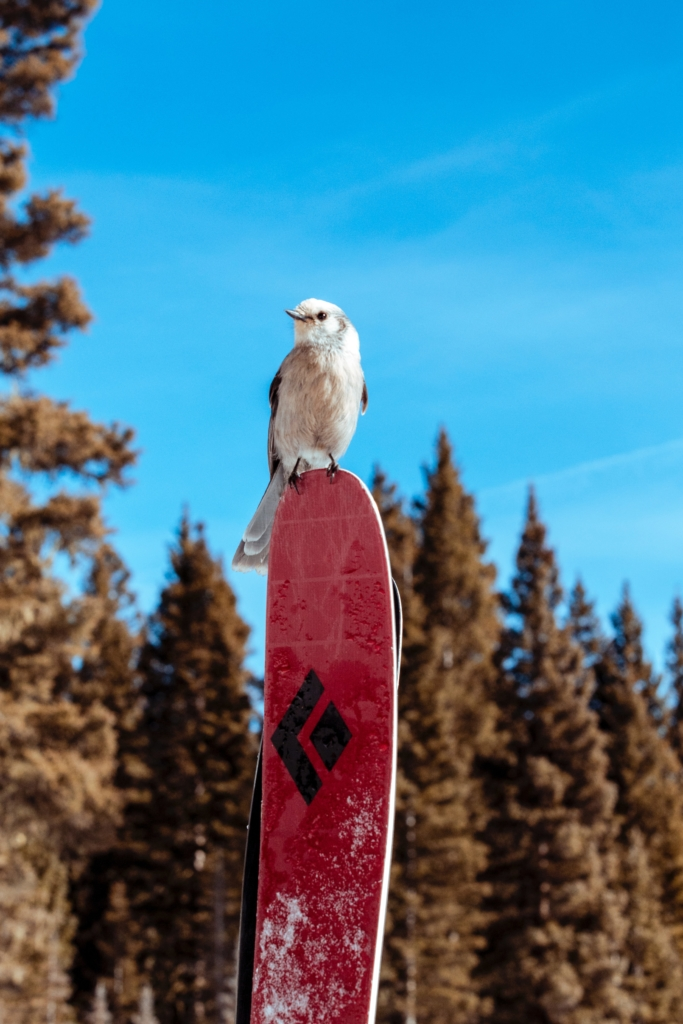 a small bird sits atop a pair of red skis under sunny, blue skies